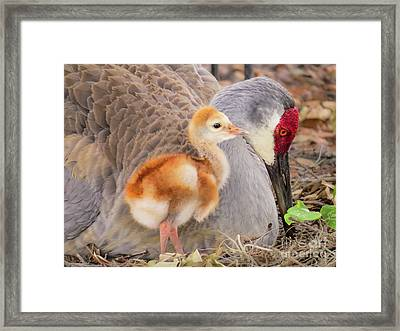 Close To Mother Framed Print