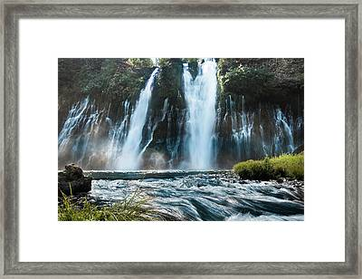Close To Nature Framed Print