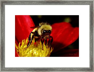 Close Up Bee Framed Print