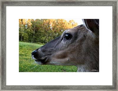 Close Up Framed Print by Bill Stephens