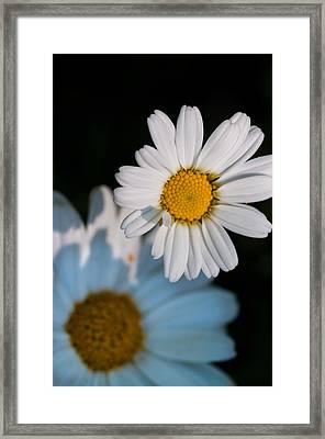 Close Up Daisy Framed Print by Nathan Wright