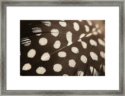 Close Up Feather Framed Print