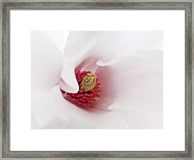 Abstract White Red Pink Flowers Macro Photography Art  Framed Print by Artecco Fine Art Photography