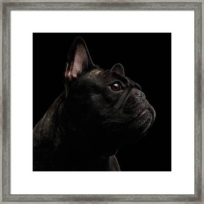 Close-up French Bulldog Dog Like Monster In Profile View Isolated Framed Print by Sergey Taran