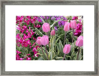 Close Up Mixed Planter Framed Print