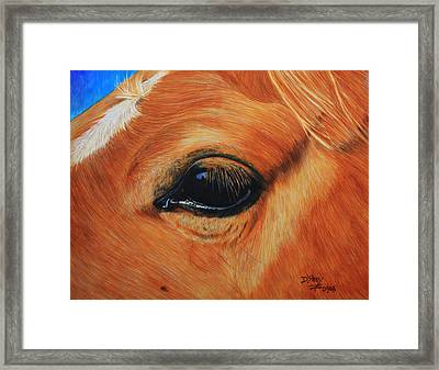 Close Up Of A Horse Framed Print by Don MacCarthy