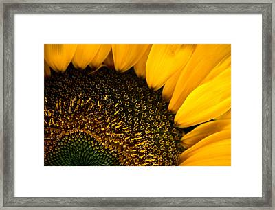 Close-up Of A Sunflower Framed Print by Todd Gipstein