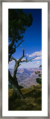 Close-up Of A Tree At The Edge Framed Print