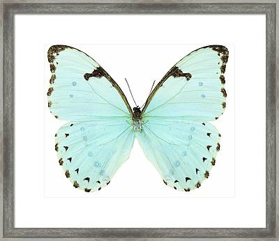 Close-up Of A White Butterfly Framed Print by Stockbyte