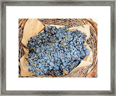 Close Up Of Black Grapes In A Basket Framed Print by Lanjee Chee