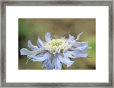 Close Up Of Blue Flower, Scabiosa, Digital Art Framed Print