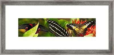 Close-up Of Butterflies Perching Framed Print