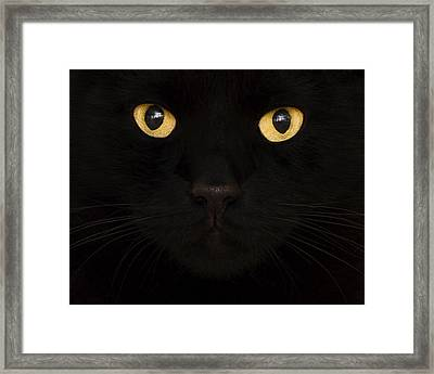 Close Up Of Cat Framed Print by Jody Trappe Photography