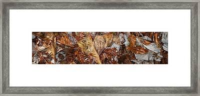 Close-up Of Dead Leaves Framed Print