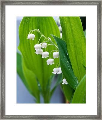 Close-up Of Dew Drops Framed Print