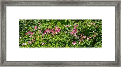 Close-up Of Flowers, Venice, Florida Framed Print