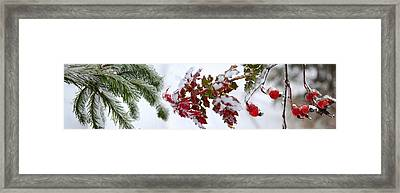 Close-up Of Frost On Plants Framed Print by Panoramic Images