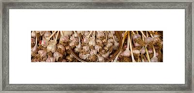 Close-up Of Garlic Allium Sativum Framed Print