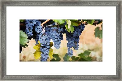 Close Up Of  Grapes Hanging On The Vine  Framed Print by Lanjee Chee