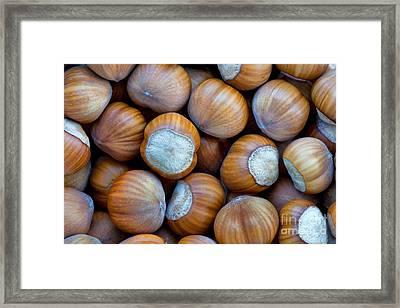 Close-up Of Harvested Hazelnuts Framed Print by Inga Spence