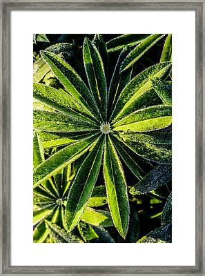 Close Up Of  Leafs Framed Print