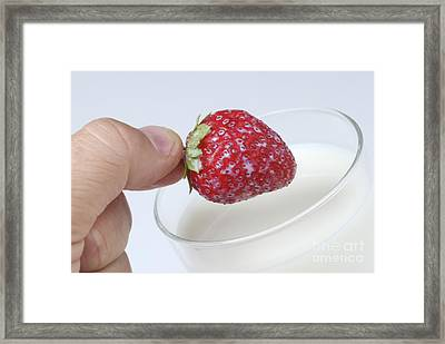 Close-up Of Man's Hand Putting Strawberry Into Glass Of Milk Framed Print