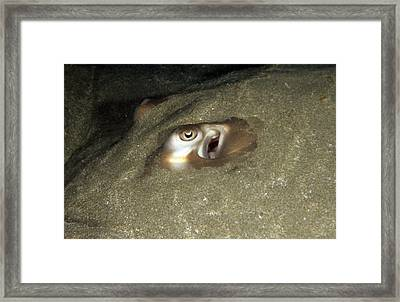 Close Up Of The Eye Of A Banded Framed Print by James Forte
