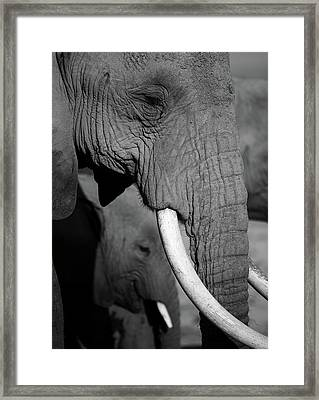 Close Up Of Two Elephants Framed Print