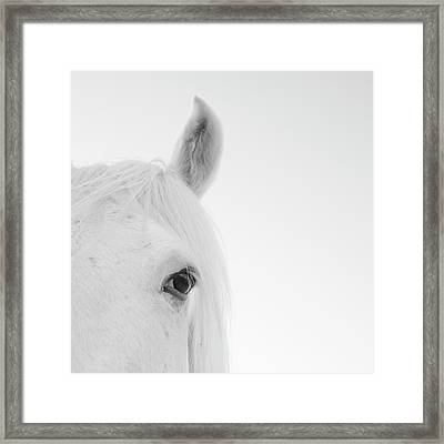 Close Up Of White Horse Framed Print