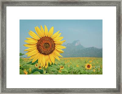 Framed Print featuring the photograph Close-up On Sunflower. by Tosporn Preede