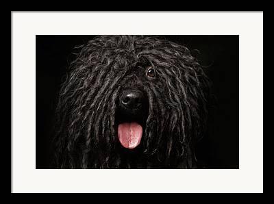 Herding Dog Framed Prints
