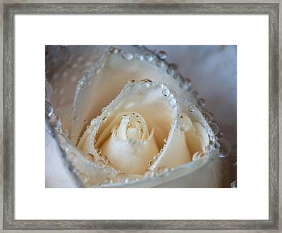 Close Up White Rose Framed Print