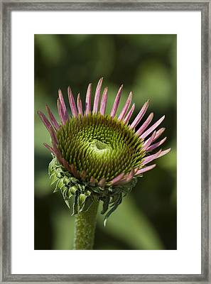 Close View Of A Flower Framed Print by Todd Gipstein