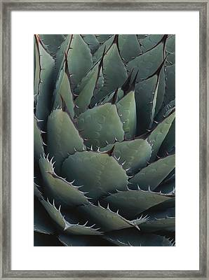 Close View Of An Agave Plant Framed Print
