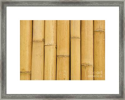 Closed Up Bamboo Background Framed Print