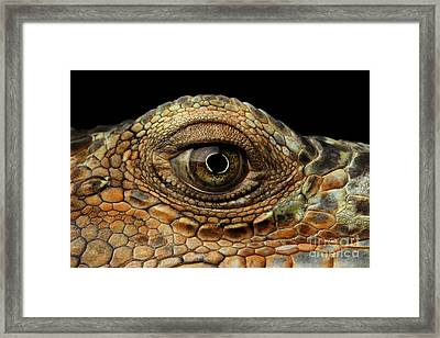Closeup Eye Of Green Iguana, Looks Like A Dragon Framed Print