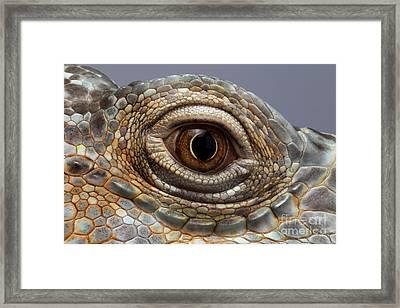 Closeup Eye Of Green Iguana Framed Print by Sergey Taran