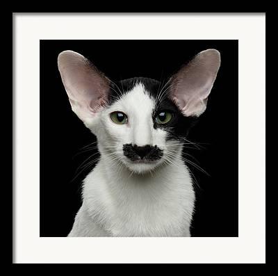 Large Cats Photographs Framed Prints