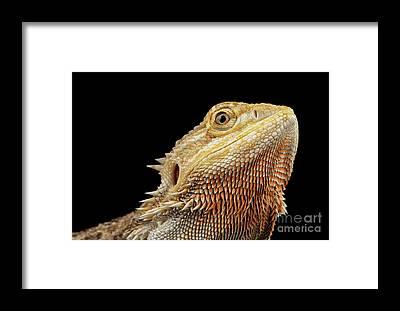 Reptile Framed Prints