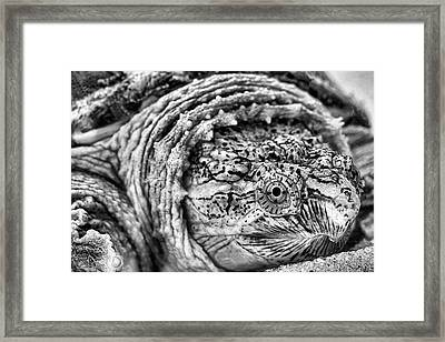 Closeup Of A Snapping Turtle Framed Print