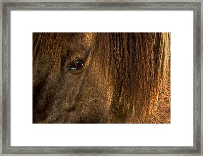 Closeup Of An Icelandic Horse #2 Framed Print
