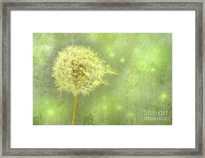 Closeup Of Dandelion With Seeds Framed Print by Sandra Cunningham