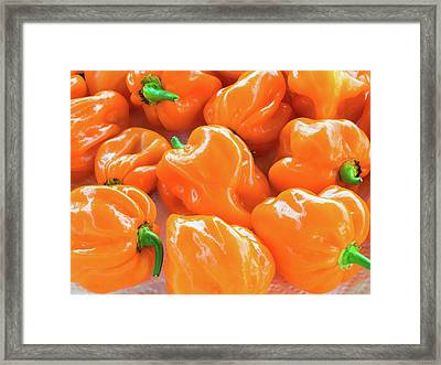 Closeup Of Fresh Chillies Habanero Orange Framed Print