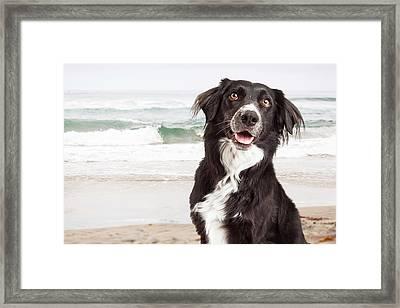 Closeup Of Happy Dog At Beach Framed Print by Susan Schmitz