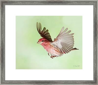 Closeup Of Mr P Finch Framed Print