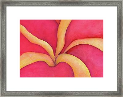 Closeup Of Red Rose Framed Print
