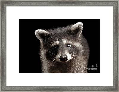 Closeup Portrait Cute Baby Raccoon Isolated On Black Background Framed Print by Sergey Taran