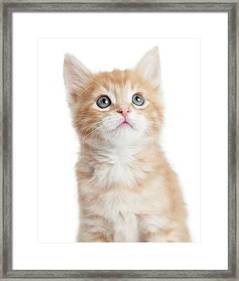 Closeup Portrait Cute Orange Tabby Kitty Framed Print