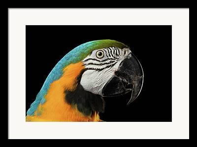 Bird Shot Framed Prints