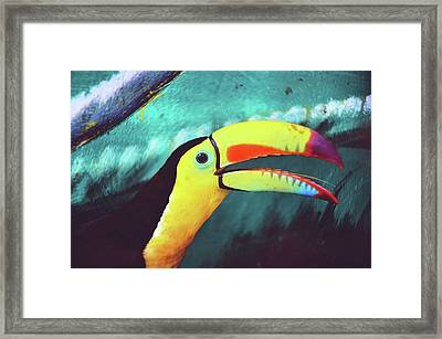Closeup Portrait Of A Colorful And Exotic Toucan Bird Against Blue Background Nicaragua Framed Print